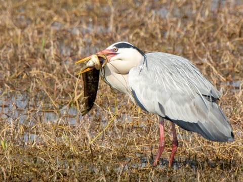 bharatpur photography tour